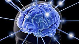 Личность Нейрофизиология 01